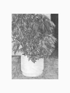 Plante 1